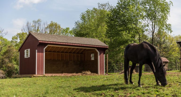 equine run in shelter 1