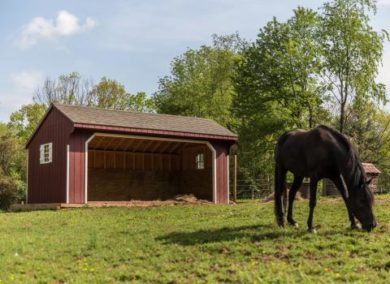 equine run in shelter 2