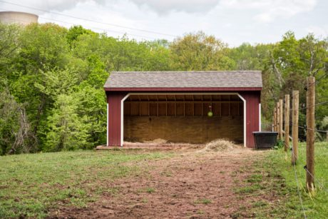 buy a horse run in shed nj pa