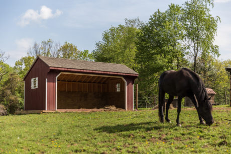 equine run in shelter