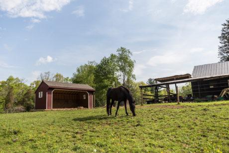 horse run in sheds de